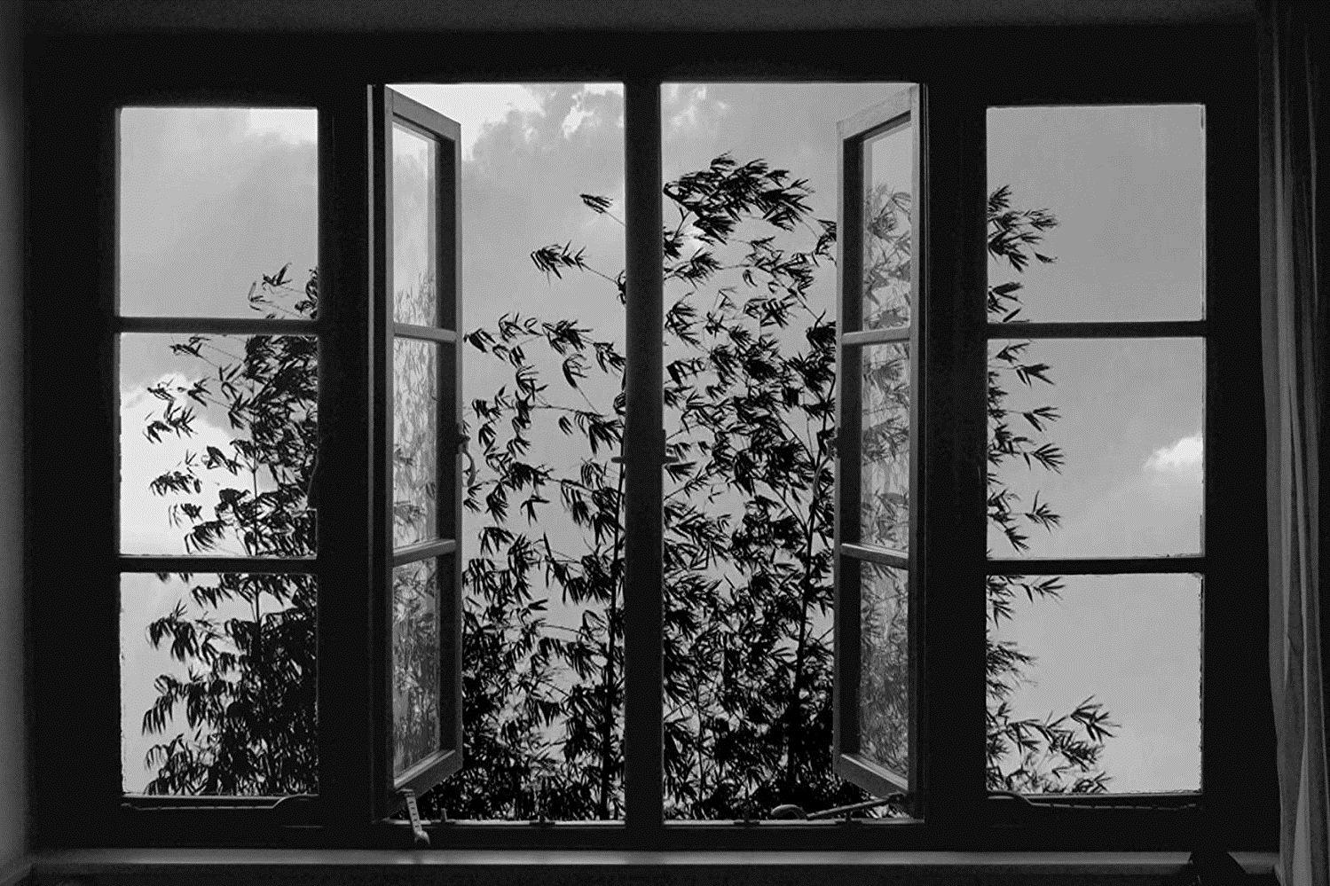 24 Frames (2017): Kiyarüstemi'den Suskun Bir Veda Hutbesi