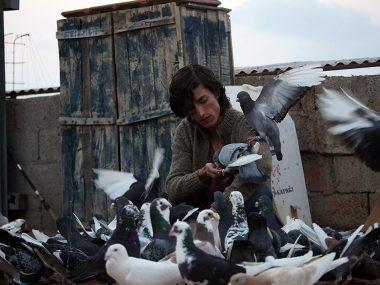 pigeon – güvercin 2