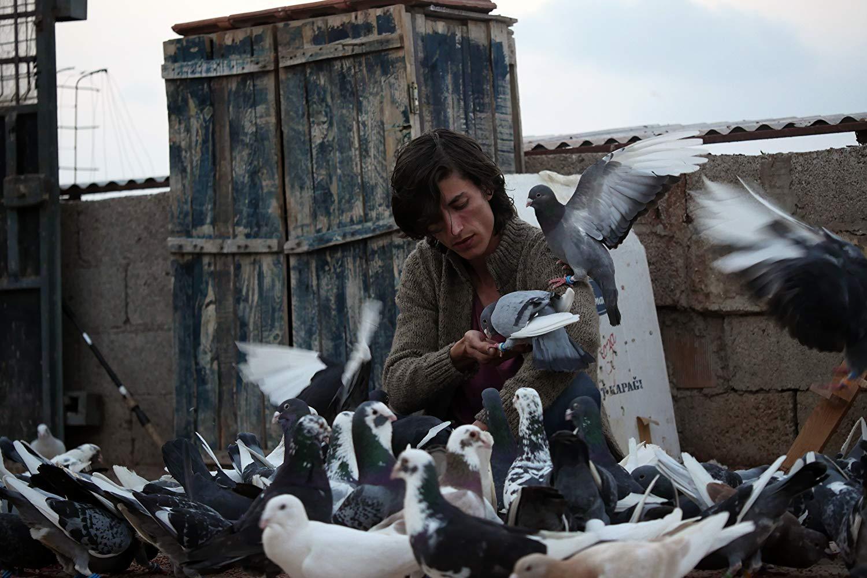 Güvercin: Çalışmayana Yem Yok (!)